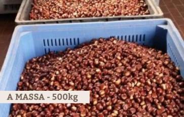 ingrosso castagne 500kg
